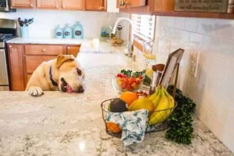 dog laying on countertops